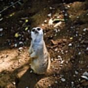 Meerkat     Say What Poster
