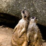 Meerkats Keeping An Eye Out Part 2 Poster