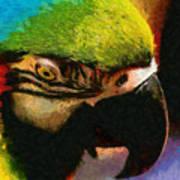 Meet The Brazilian Arara Poster