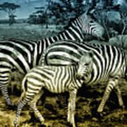 Meet The Zebras Poster