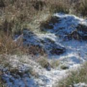 Melting Snow On Plants Poster