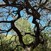 Mesquite Window Poster