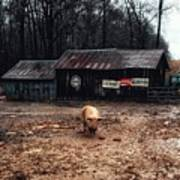 Messy Pig Farm Lot Poster