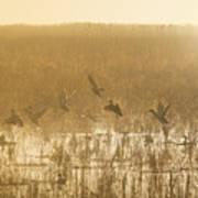 Metzgers Marsh In Fog Poster