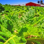 Michigan Surgar Beet Farming Poster