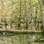 Michigan Swamp Poster