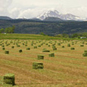 Mid June Colorado Hay  And The Twin Peaks Longs And Meeker Poster