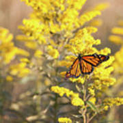 Migrating Monarch Butterfly Moses Cone Memorial Park North Carolina Poster