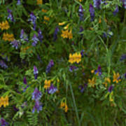 Mimulus And Vetch Poster