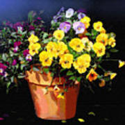 Mini Pansy Pot Poster