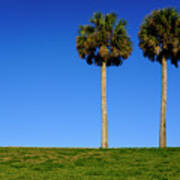 Minimal Palm Trees On A Hill In Saint Augustine Florida Poster