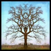 Mirror Tree Poster
