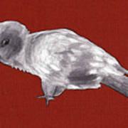 Mischievous Bird Poster