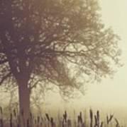 Mist Poster by Odd Jeppesen