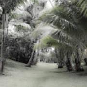 Misty Hawaiian Garden Poster