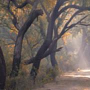 Misty Morning, Bharatpur, 2005 Poster