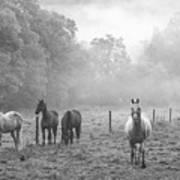 Misty Morning Horses Poster