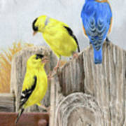 Misty Morning Meadow- Goldfinches And Bluebird Poster