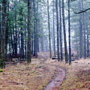 Misty Morning Trail In The Woods Poster