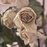 Misty Rose Tinted Dried Roses Poster