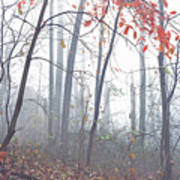 Misty Woodland Showing The Last Fall Color Poster