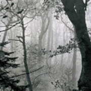 Misty Woods, Juniper Poster