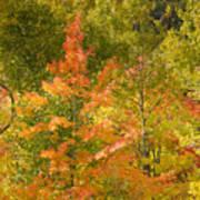 Mixed Autumn Poster
