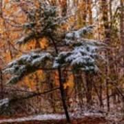 Mixed Seasons Poster