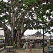 Moana Surfrider Banyan Court - Waikiki Beach Poster