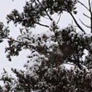 Mocking Bird Greeting 2 Poster