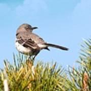 Mockingbird 03 Poster