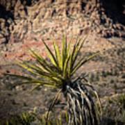 Mojave Yucca Poster