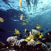 Molokini Snorkeling Couple Poster