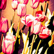 Molten Gold Tulips Poster