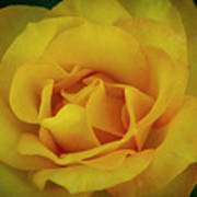 Moms Yellow Rose Poster