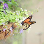 Monarch And Garden Basket Poster