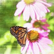 Monarch Butterfly Art Poster