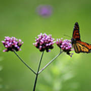 Monarch Butterfly Balanced 2017 Poster