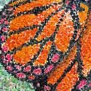 Monarch Butterfly On Ocotillo Blossom Poster
