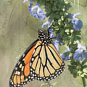 Monarch Butterfly Textured Background Poster