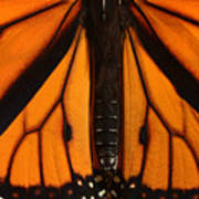 Monarch Butterfly Wings Poster