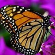 Monarch Dreams Poster