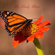 Monarch On Tithonia Mother's Day Gifts Poster