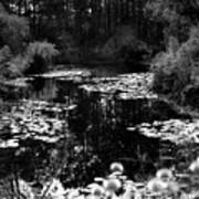 Monet Lake Poster