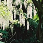 Monet's Garden Delights Poster