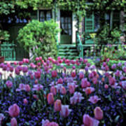 Monet's House With Tulips Poster
