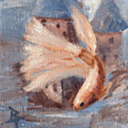 Mongo Betta Fish Poster by Brenda Thour