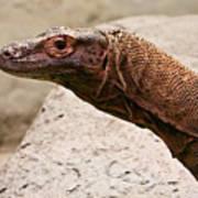 Monitor Lizard Poster