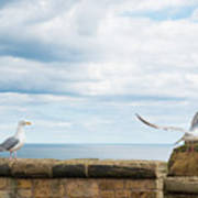 Monitored Seagull Take-off Poster