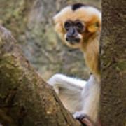 Monkey Chillin Poster
